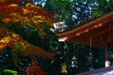 石清水八幡宮の灯籠と紅葉