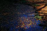 鎌倉扇ガ谷 池畔の敷紅葉