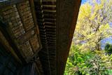明王院 本堂とイチョウ黄葉