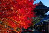 清凉寺 紅葉と仁王門