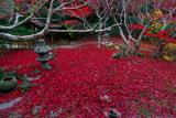 京都厭離庵 冬紅葉