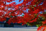 紅葉と京都御所