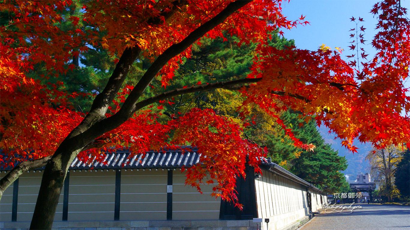 紅葉と仙洞御所 壁紙