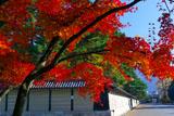 紅葉と仙洞御所