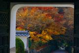 興聖寺山門越しの琴坂紅葉