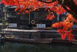 宇治 紅葉越しの紅葉船