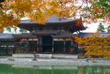 平等院 紅葉と鳳凰堂中堂