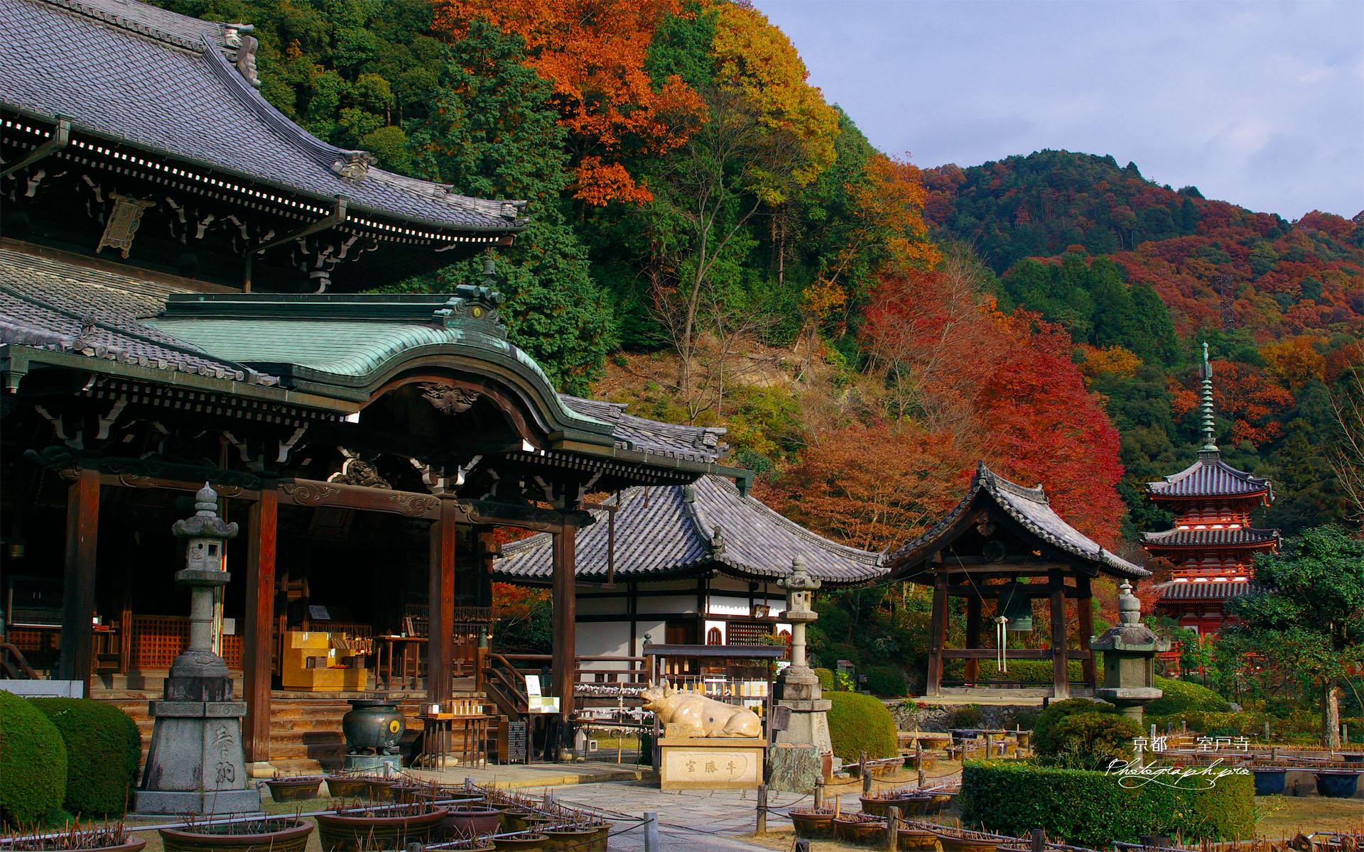 紅葉の三室戸寺