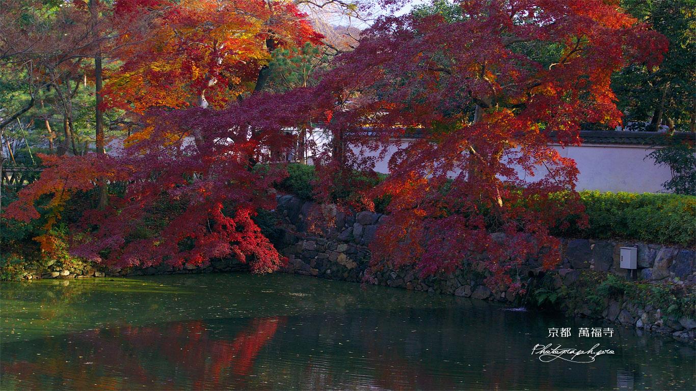 紅葉の萬福寺放生池 壁紙