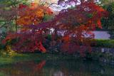 紅葉の萬福寺放生池