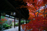 紅葉の萬福寺回廊