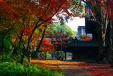 向日神社本殿裏の紅葉