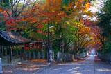 向日神社手水舎と参道の紅葉