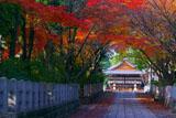 向日神社参道と舞楽殿の紅葉