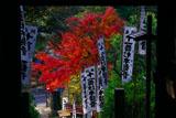 鎌倉 杉本寺仁王門越しの紅葉