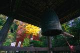 鎌倉 杉本寺鐘楼越しの紅葉