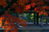 紅葉の円覚寺山門