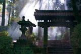 浄智寺参道に降り注ぐ光芒