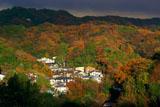 源氏山公園から紅葉の扇ガ谷
