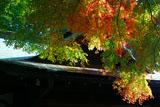 鎌倉宮 紅葉と宝物殿