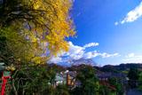 荏柄天神社の大銀杏と秋空