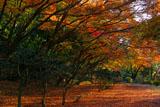 源氏山公園 冬紅葉