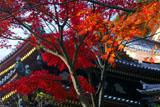 鎌倉長谷寺の紅葉と観音堂