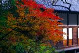 鎌倉光則寺の名残紅葉と本堂
