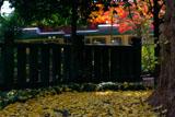 鎌倉御霊神社 冬紅葉と江ノ電