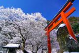 貴船神社 梶取社の雪の花