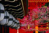 北野天満宮の星梅鉢紋の灯篭