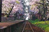 芦野公園駅の桜