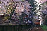 走れメロス号と桜
