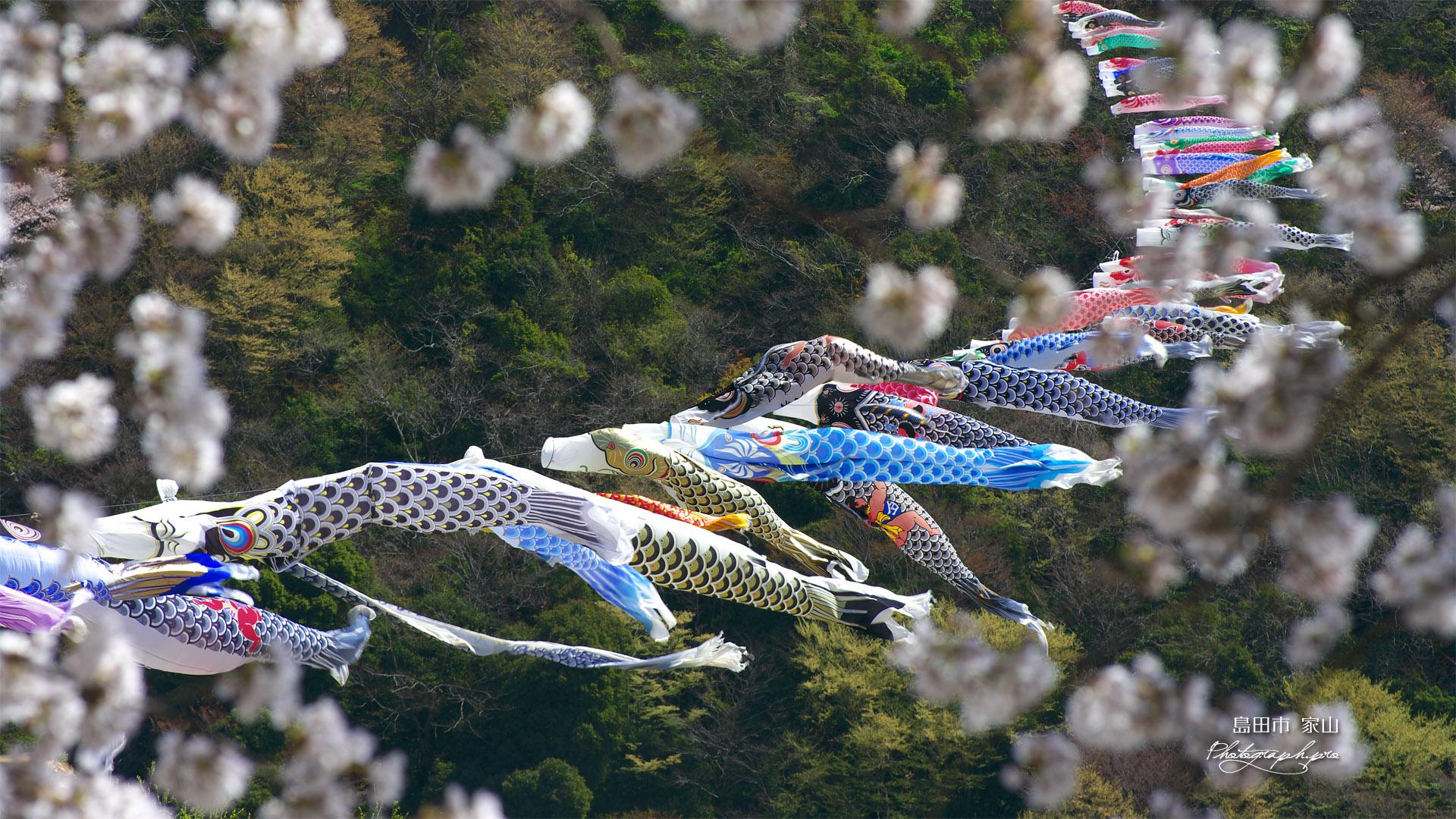 大井川横断鯉のぼり の壁紙 19x1080