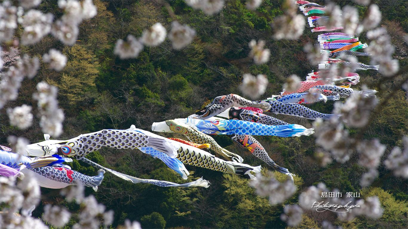 大井川横断鯉のぼり 壁紙