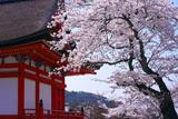 清水寺の桜と田村堂