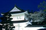 二条城 夜桜ライトアップ
