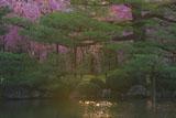 平安神宮 東神苑の紅枝垂桜