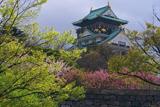 大阪城公園の桜 新緑と八重桜