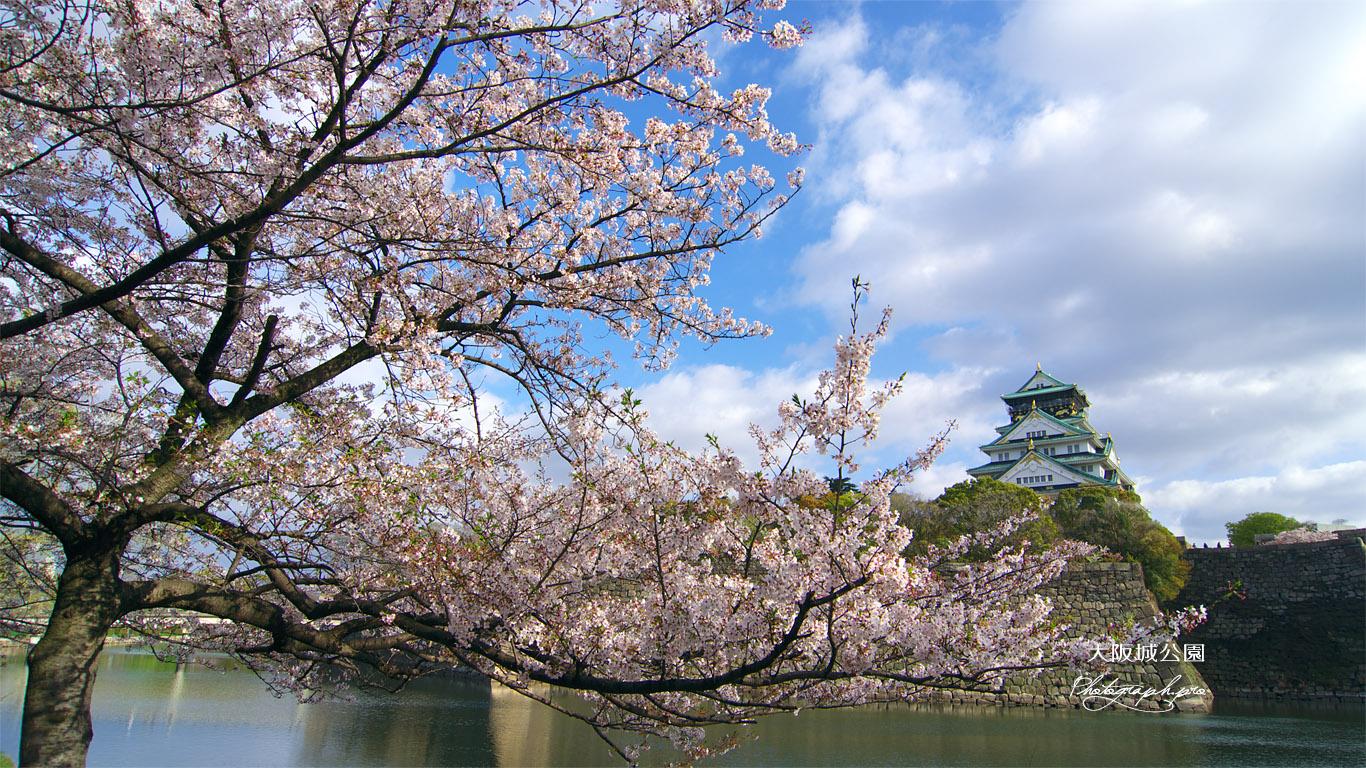 大阪城公園の桜 内濠 壁紙