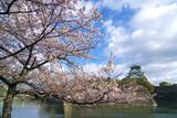 大阪城公園の桜 内濠