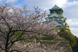 大阪城公園の桜 天守閣