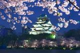 大阪城公園の桜 西の丸庭園の夜桜