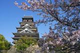 広島城の桜 天守閣