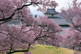 高遠城址公園の桜と信州高遠美術館