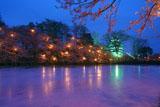 高田公園の桜 高田城の夜桜
