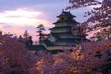 鶴ヶ城の桜 ライトアップ