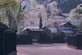 角館武家屋敷桝形のしだれ桜
