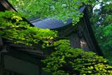 延暦寺横川 新緑の元三大師堂