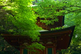 延暦寺横川 新緑の根本如法塔